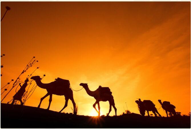 Kenya - Amboseli, Ol Pejeta, Masai Mara 2