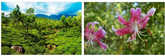 Asia Flora